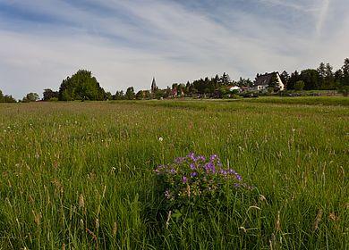 Frühlingswiese Friedrichsbrunn