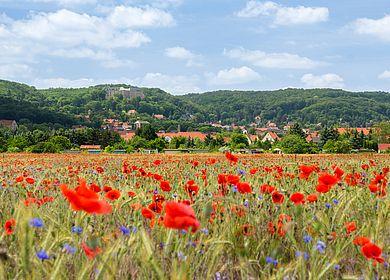 Blütenstadt Blankenburg